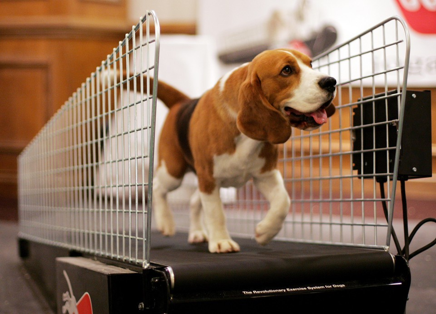 You can even get a doggy treadmill!