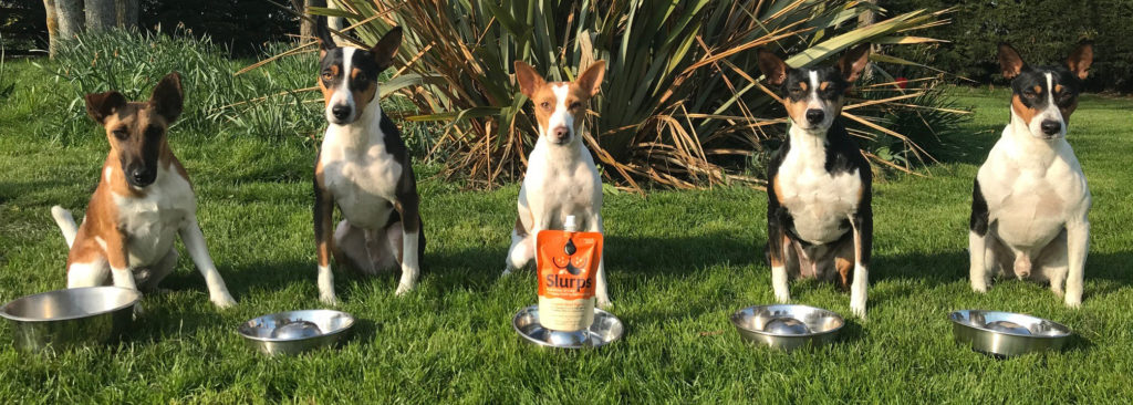 Keep your dogs healthy and hydrated with Slurps!